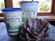 Full Cream Plain Yoghurt (stirred)